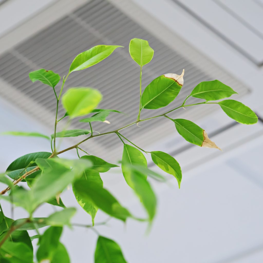 Plant in a home with quality air
