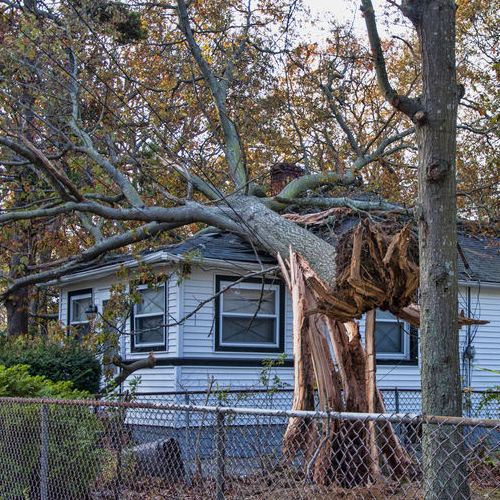 A Tree Fell on a House.